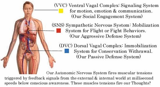 Polyvagal-Anatomy-Diagram